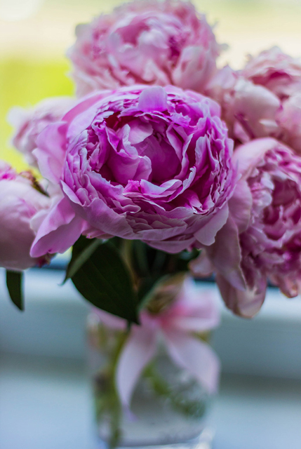 peonies-in-jar-web